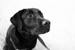 Nikki - dog