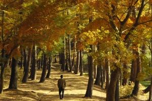 turn in autumn
